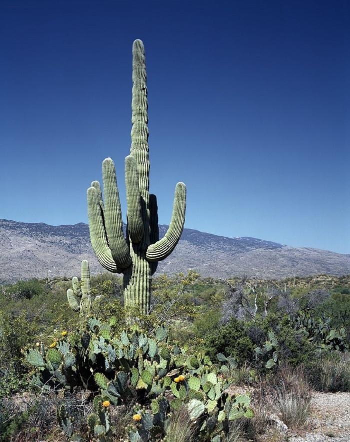cactus-793841_1280