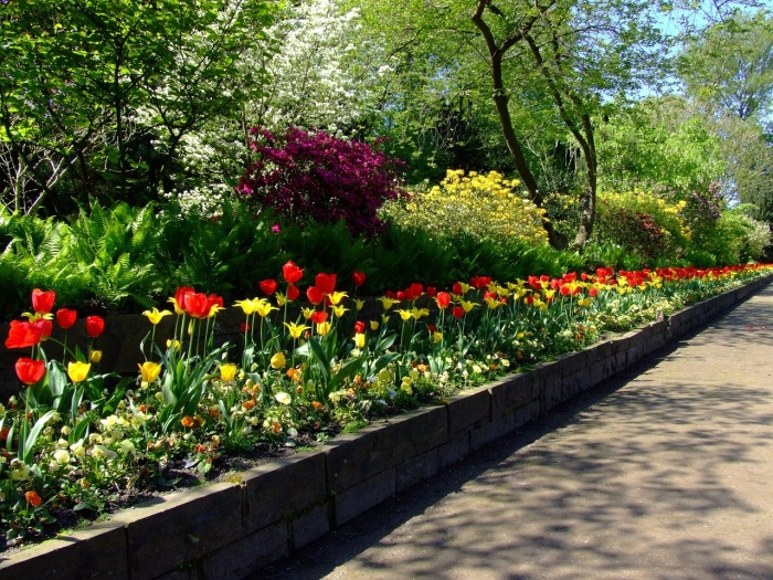 tulips-174596_1280