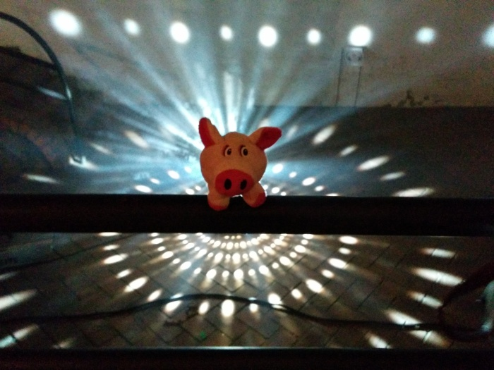 Rosa Schweino tanzt