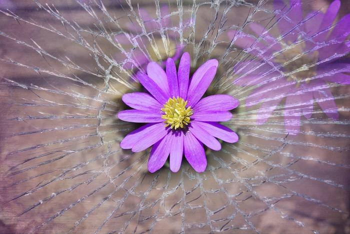 balkan-anemone-756762_1920