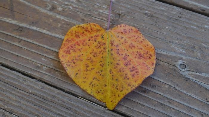leaf-187981_1920