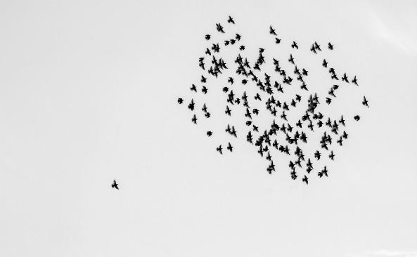 birds-1714542_1920
